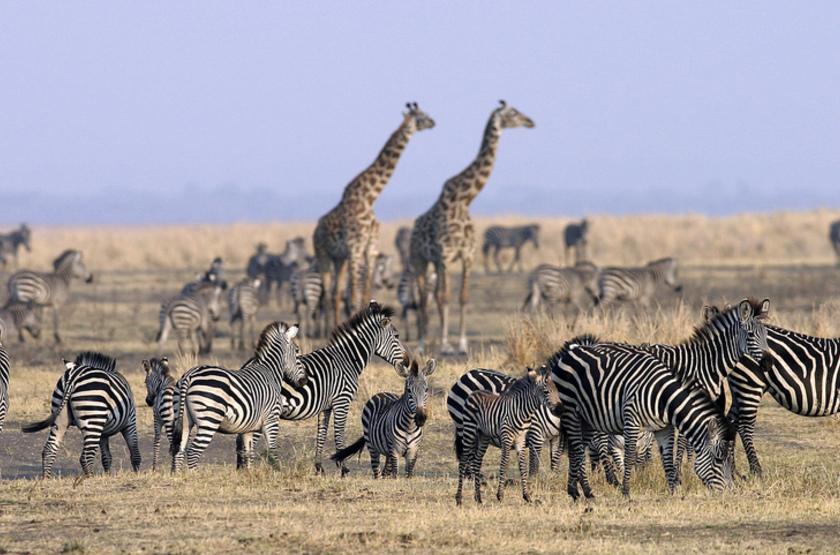Parc de Katavi, Tanzanie