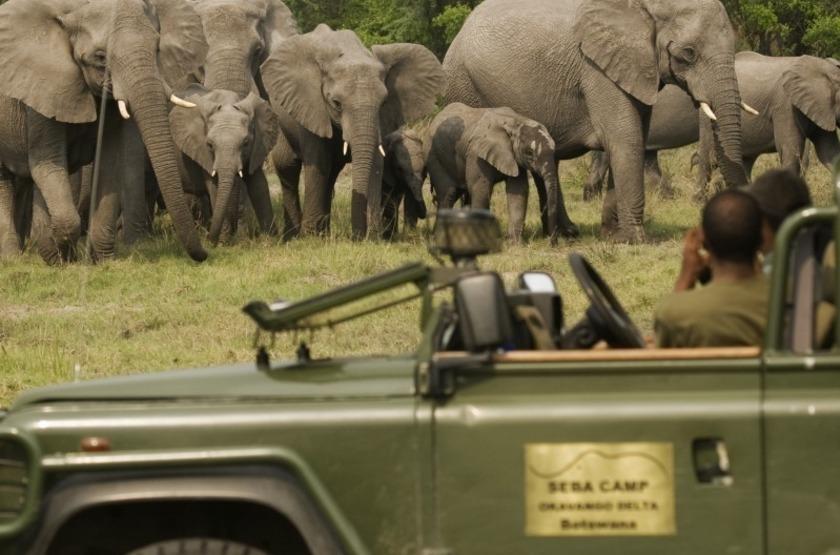 Safari en 4x4 à Seba Camp