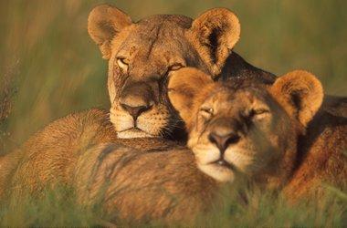 Voyage safari en famille en Afrique du Sud, voyage Afrique