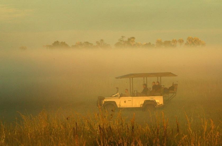 Safari matinal, Botswana