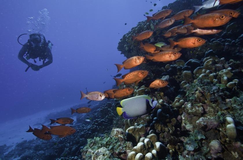 Seychelles   north island   plongee 3 slideshow