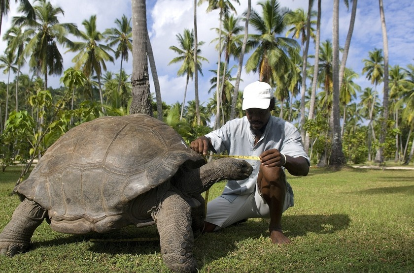 Seychelles   north island   tortue geante slideshow