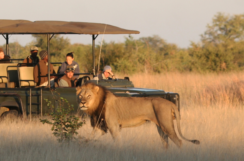 Safari en 4x4, Camp Hwange, Zimbabwe