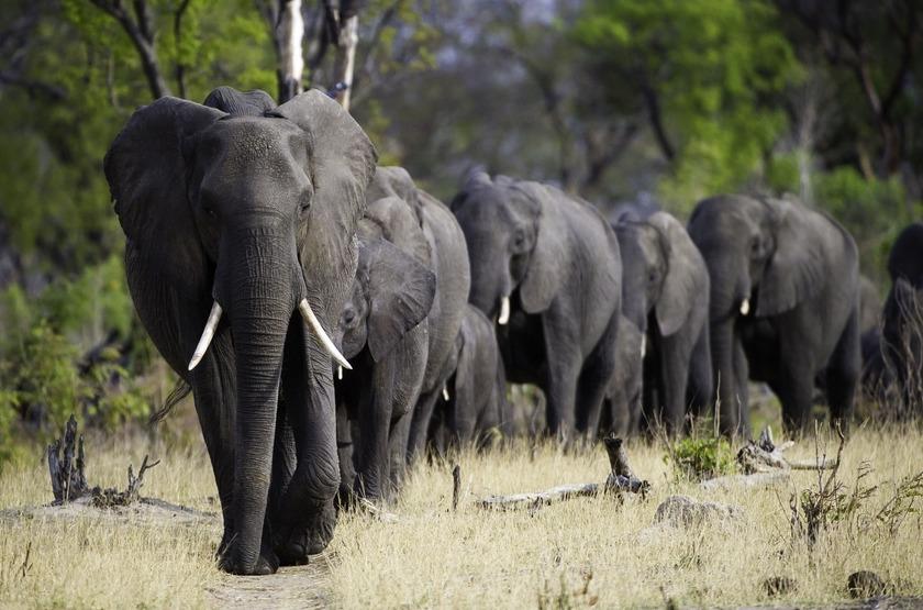 Safari à Camp Hwange, Zimbabwe