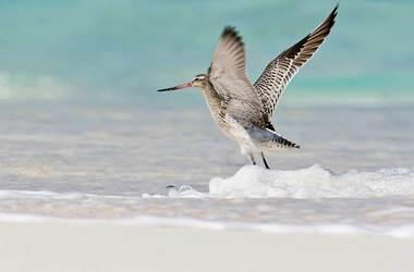 Bird Island, l'île aux oiseaux, voyage Océan indien