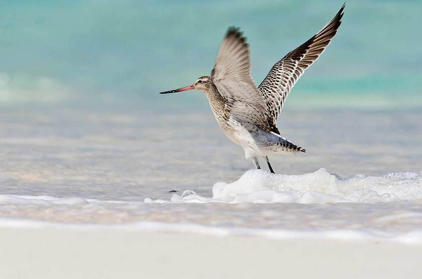 Seychelles   bird island   oiseau slideshow