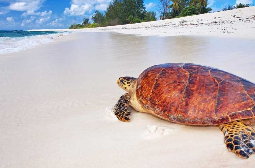 Seychelles   bird island   tortue slideshow