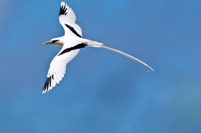 Seychelles   bird island   oiseaux 2 slideshow