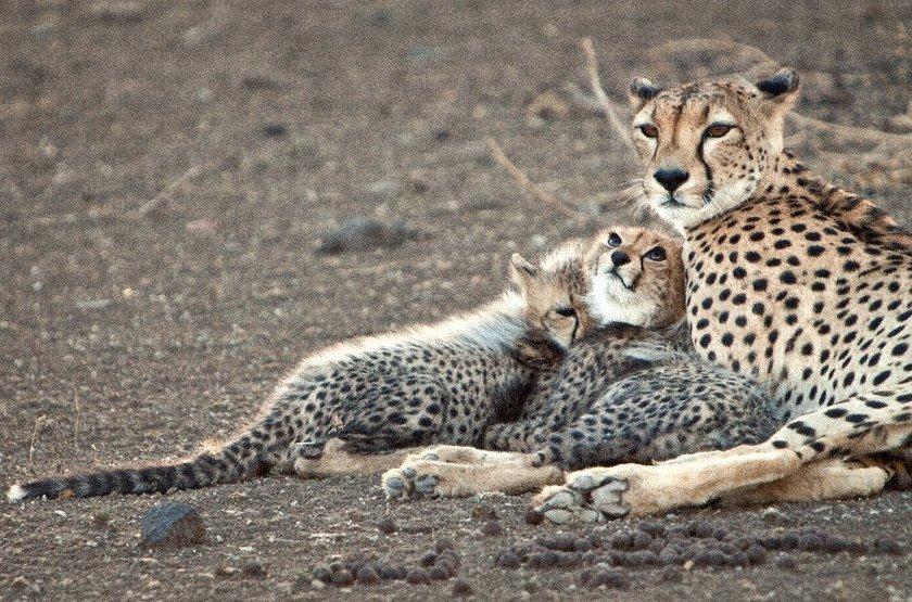 Safari dans la Limpopo, Mozambique