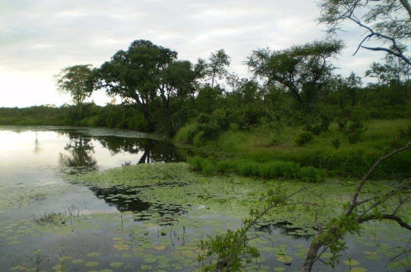 La rivière Limpopo, Mozambique