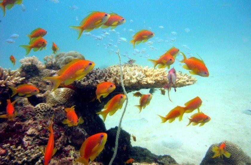 Plongée au Mozambique, Nuarro Beach Lodge