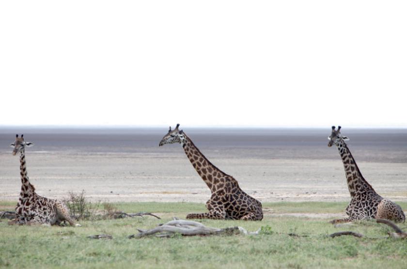 Lac Manyara, Tanzanie