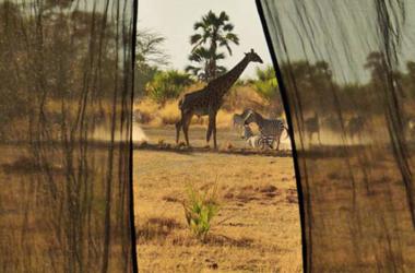 Safari à Chem Chem : Voyage de noces en Tanzanie, voyage Afrique