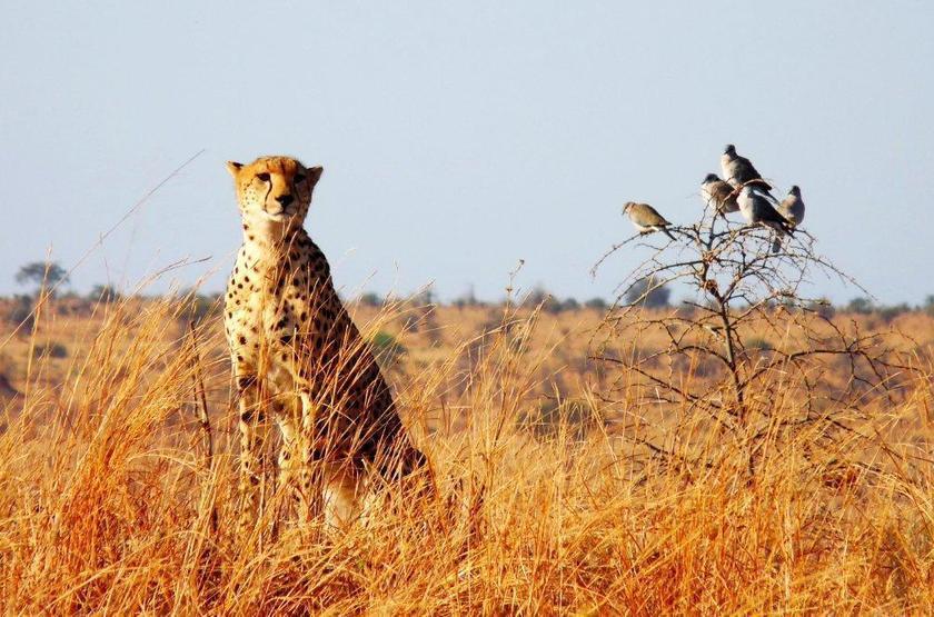 Parc de Tarangire, Tanzanie