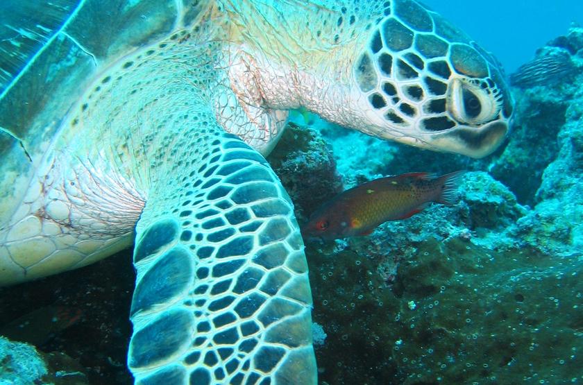 Plongée à Zanzibar