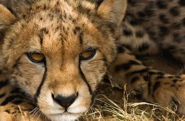Afrique du Sud : Safari en réserve privée au Kruger et Cape Town, voyage Afrique