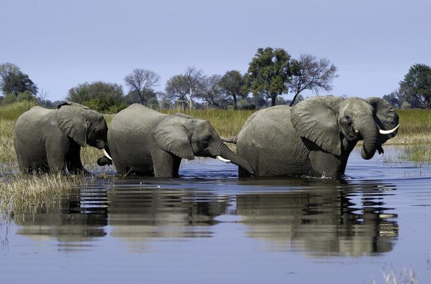 Delta de l'Okavango, Botswana