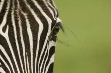 Safari en Tanzanie : Manyara, Serengeti, Ngorongoro, Tarangire, voyage Afrique