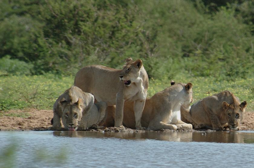 Autotour à Etosha Parc, Namibie