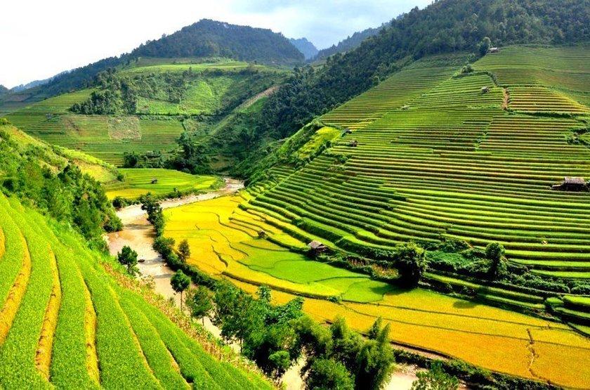 Rizières vietnamiennes, montagnes du Tonkin, Vietnam