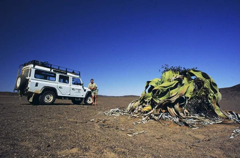 Autotour en Namibie, Welwitchia