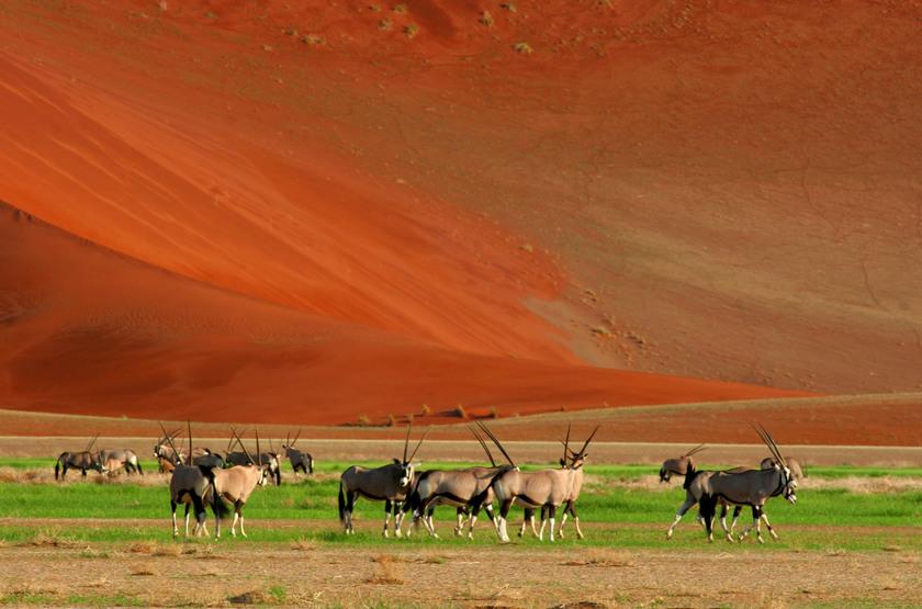 Oryx dans le NamibRand, Namibie