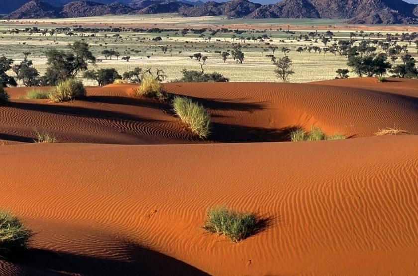 Désert du NamibRand, Namibie