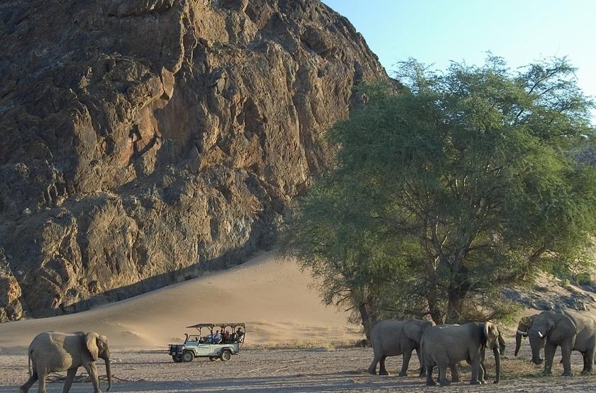 Eléphants du désert, Damaraland, Namibie