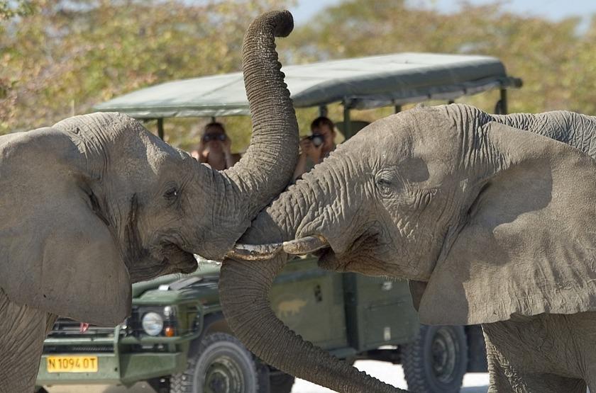 Safari en 4x4 à Ongava, Namibie