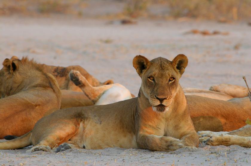 safari dans le parc d'Etosha, Namibie