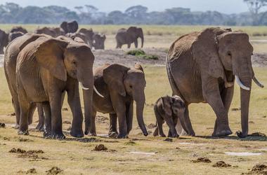 Kenya – Tanzanie : Amboseli, Manyara, Ngorongoro et Serengeti, voyage Afrique