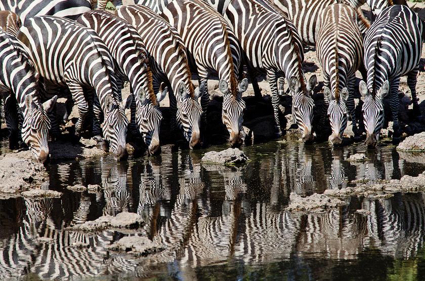 Tanzanie, Cratère du Ngorongoro