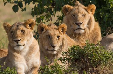 Voyage safari en famille et séjour balnéaire à Zanzibar, voyage Afrique