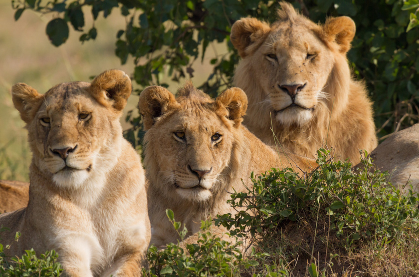 Voyage en famille en Tanzanie, Serengeti