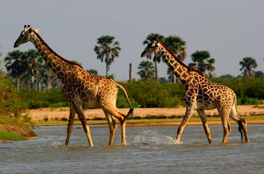 Tanzanie Sud