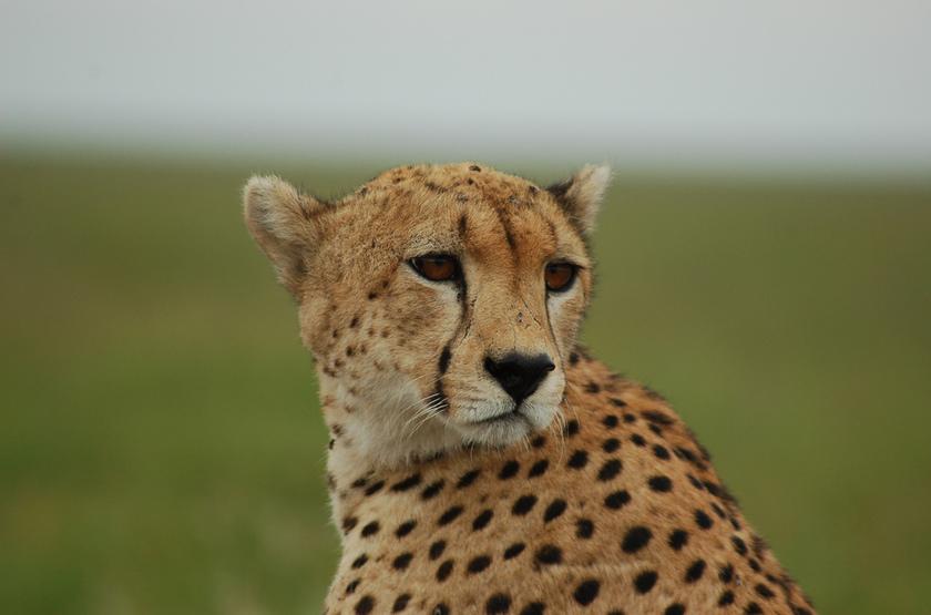 Tanzanie sud, parc de Ruaha