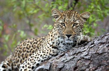 Tanzanie sud : safari à Selous et séjour à Ras Kutani, voyage Afrique