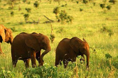 Voyage safari dans le grand sud tanzanien, voyage Afrique