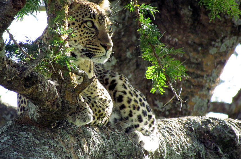 Tanzanie, parc de Selous