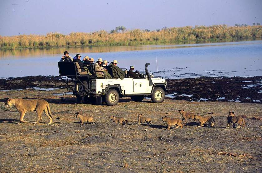 Safari à Duma Tau Camp, Botswana