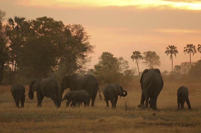 Dans la Moremi, Botswana