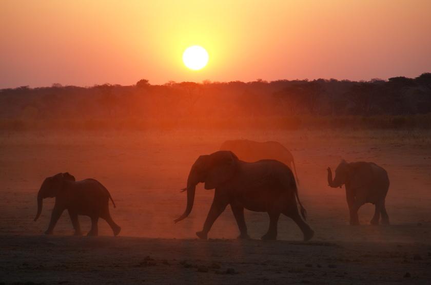Eléphants, Camp Hwange, Zimbabwe