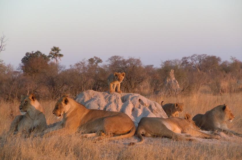 Parc Hwange, Camp Hwange, Zimbabwe