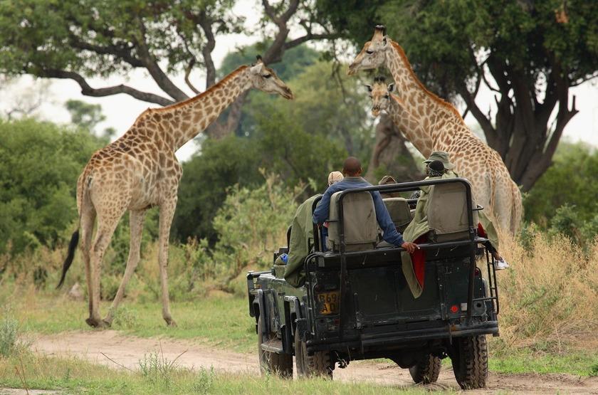 Safari en 4x4 dans la Linyanti, Botswana