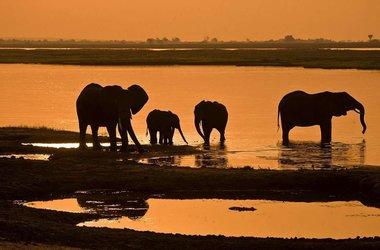 Safari à Chobe et les chutes Victoria, voyage Afrique