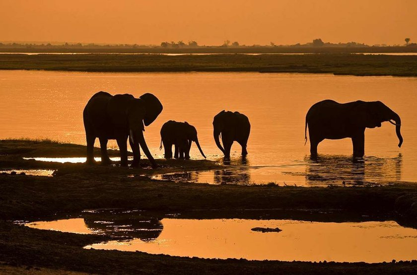 Eléphants dans la rivière Chobe, Chobe Princess