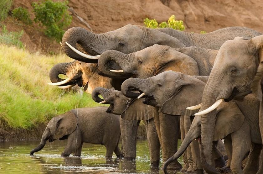 Eléphants, Chobe Princess, Botswana