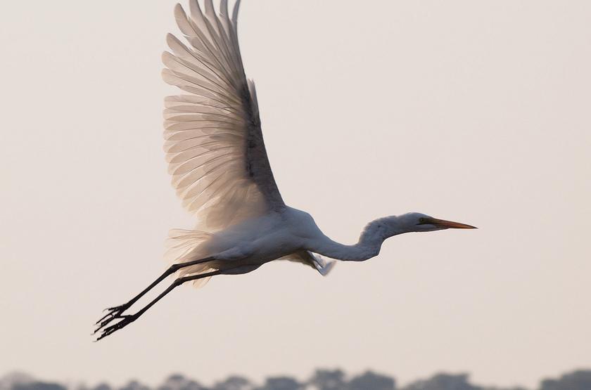 Rivière Chobe, Botswana