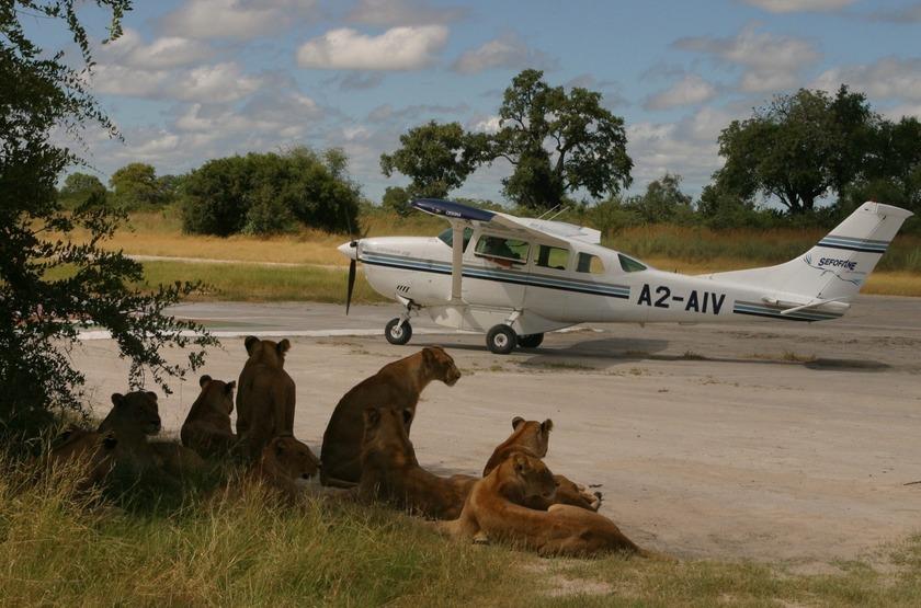 Avion taxi dans le delta de l'Okavango, Botswana
