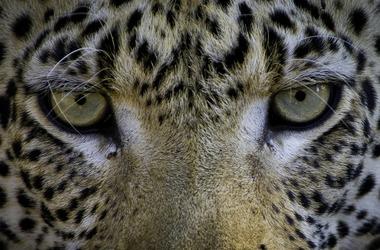 Le must du safari au Botswana, voyage Afrique
